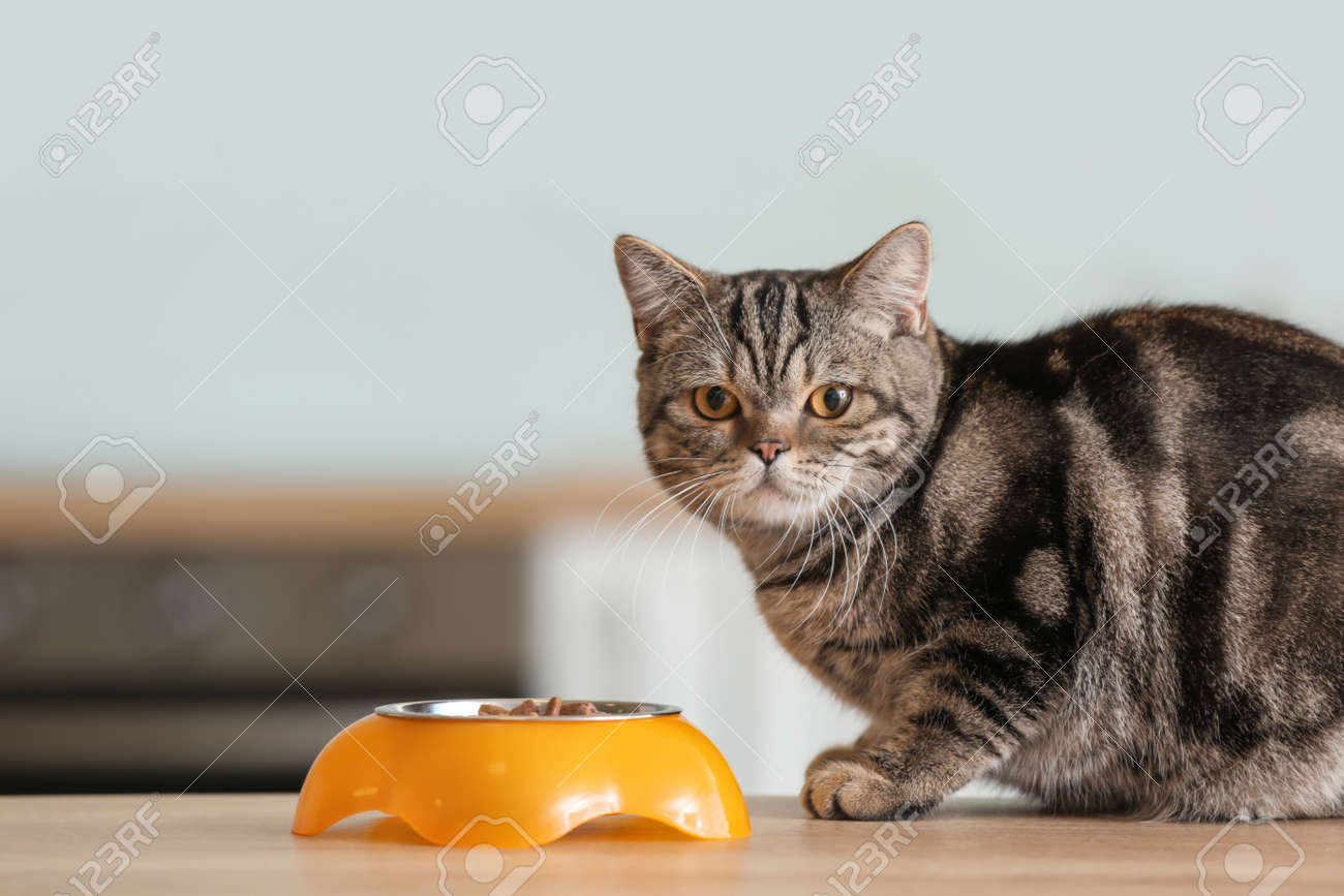 Cute cat near bowl with food on kitchen table - 166356196