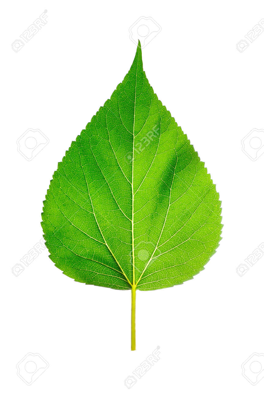 Leaf of a plant close up Stock Photo - 3445196