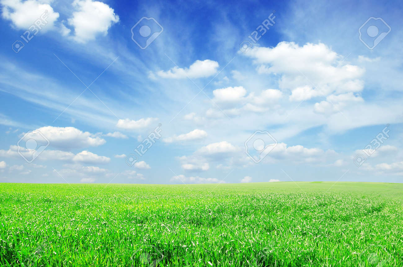 field and sky Stock Photo - 5603110
