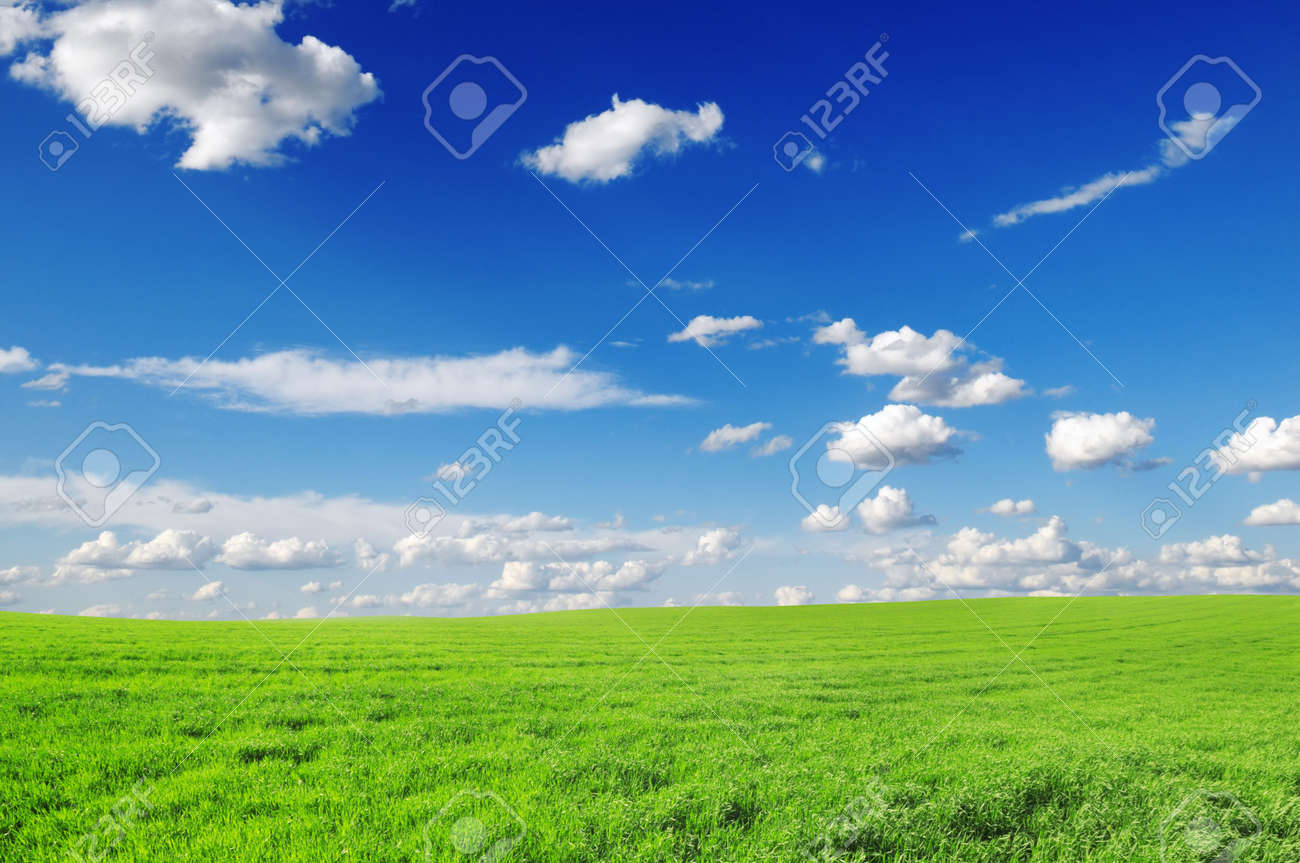 spring field and the blue sky Stock Photo - 6416682