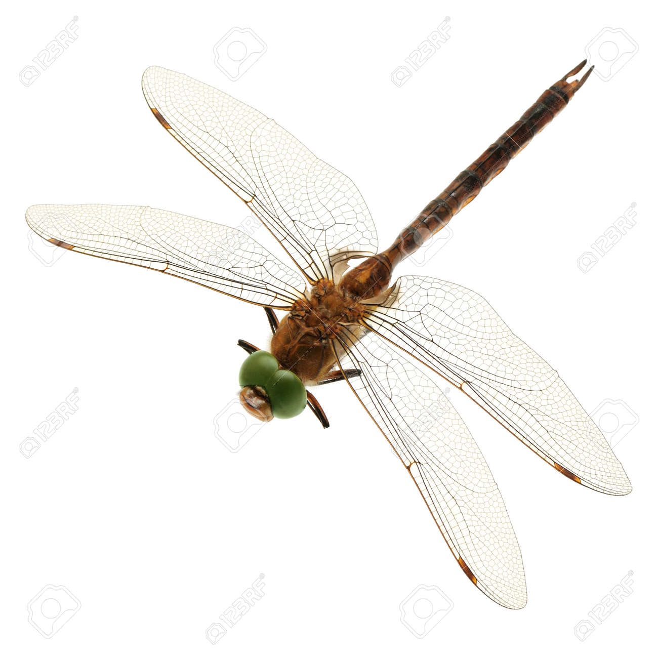 dragonfly isolated on a white background Stock Photo - 10552311