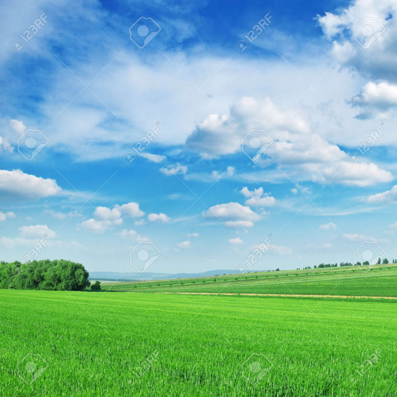 Green spring meadow and the beautiful blue sky - 11979764