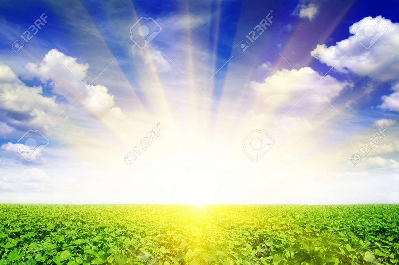 sunflower field and beautiful sunrise - 12067667