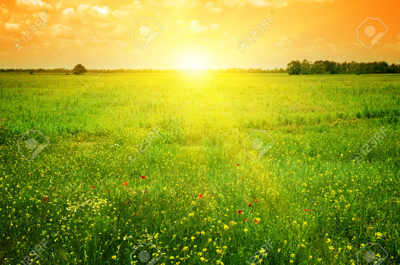 Beautiful sunset on a spring field - 12740778