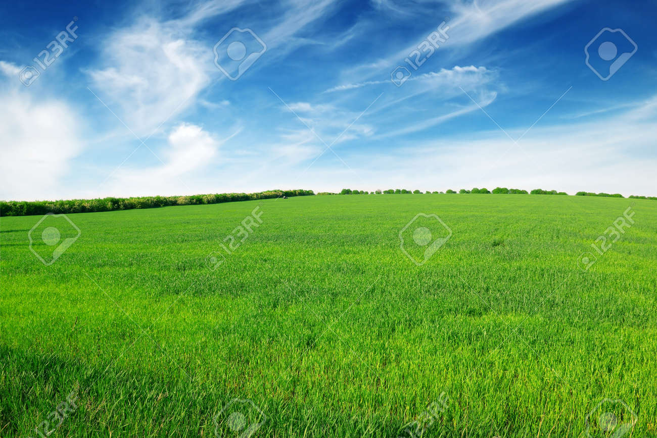 field and sky - 14738217