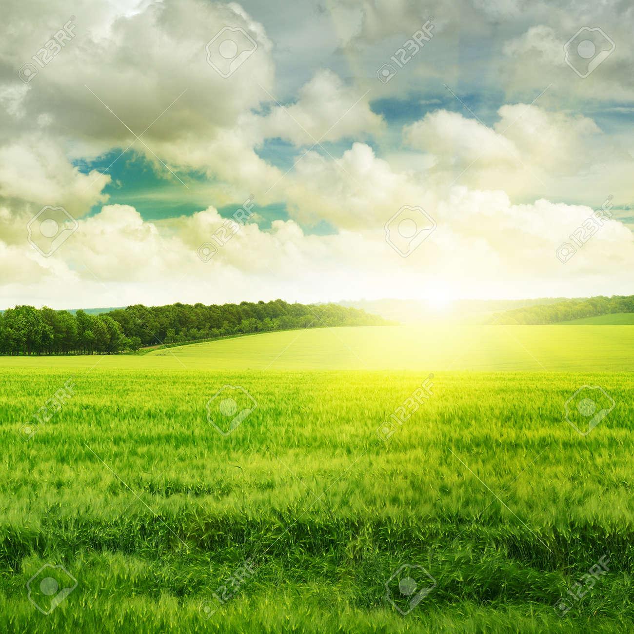 sunset on spring field - 15120474