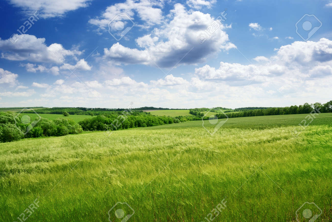 green field and blue sky Stock Photo - 15680082