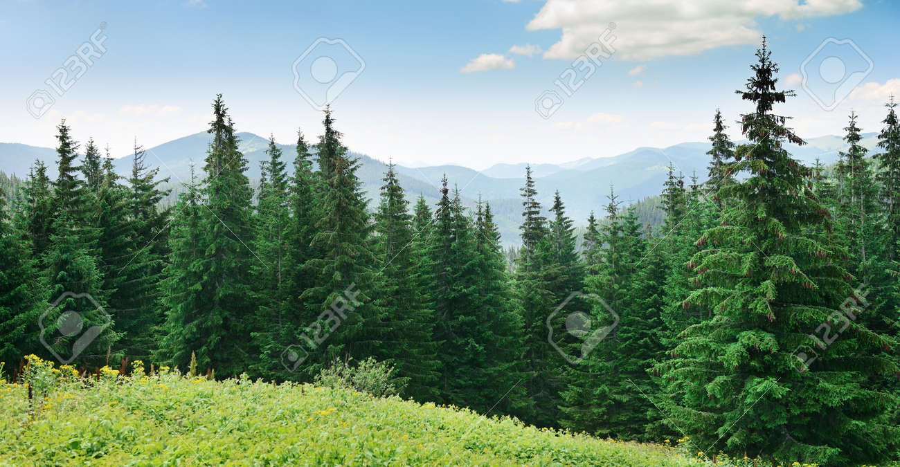 Beautiful pine trees on background high mountains. - 23288485