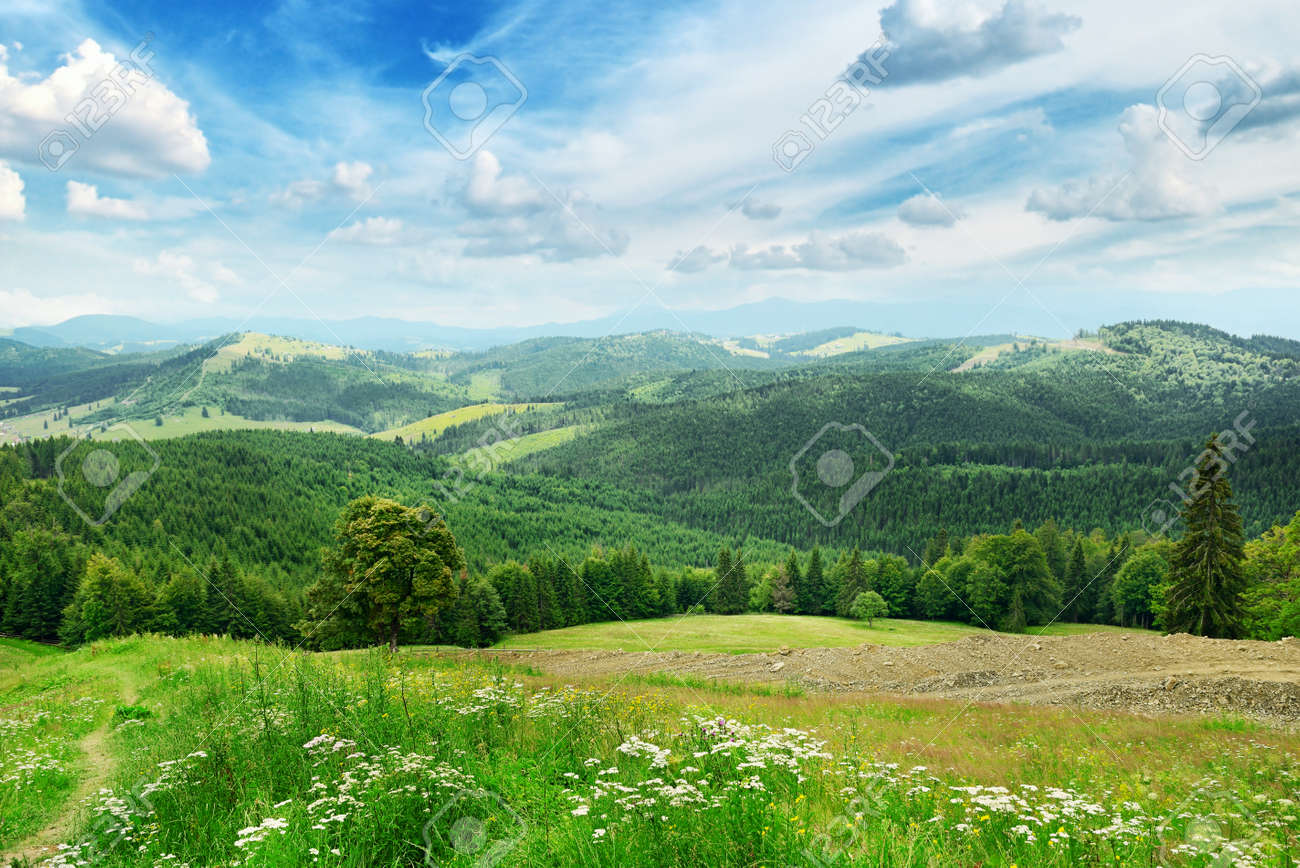 Beautiful mountains covered trees - 26071304