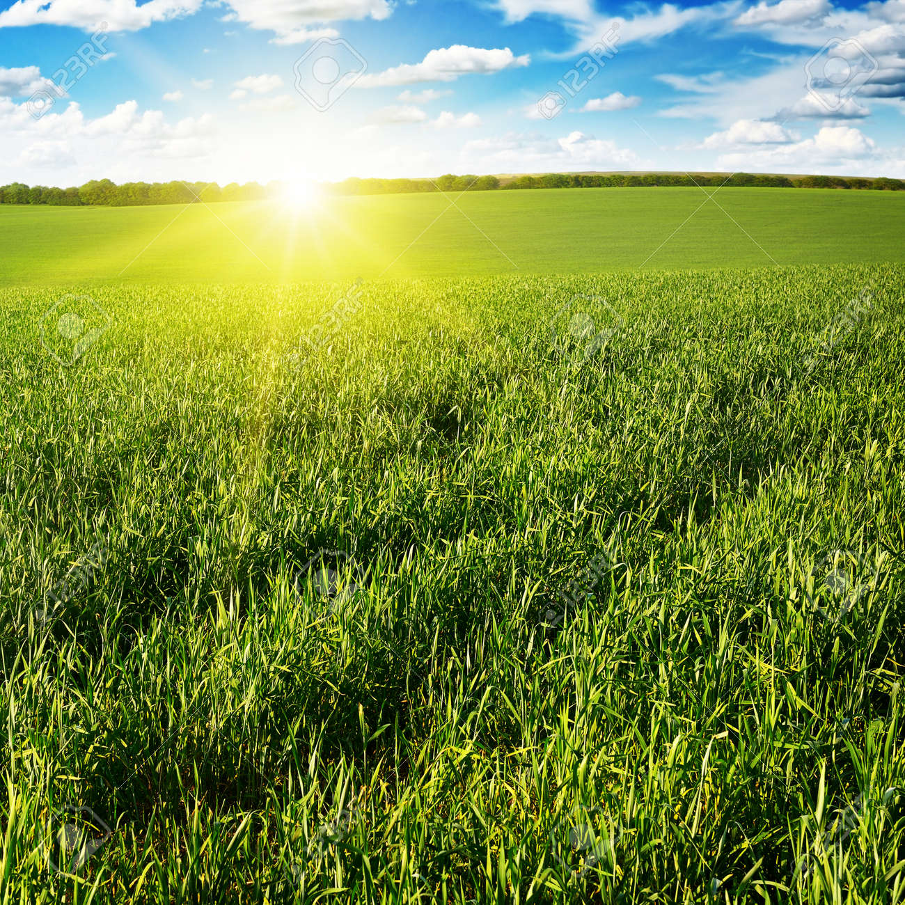 Beautiful sunset on green field - 26071320