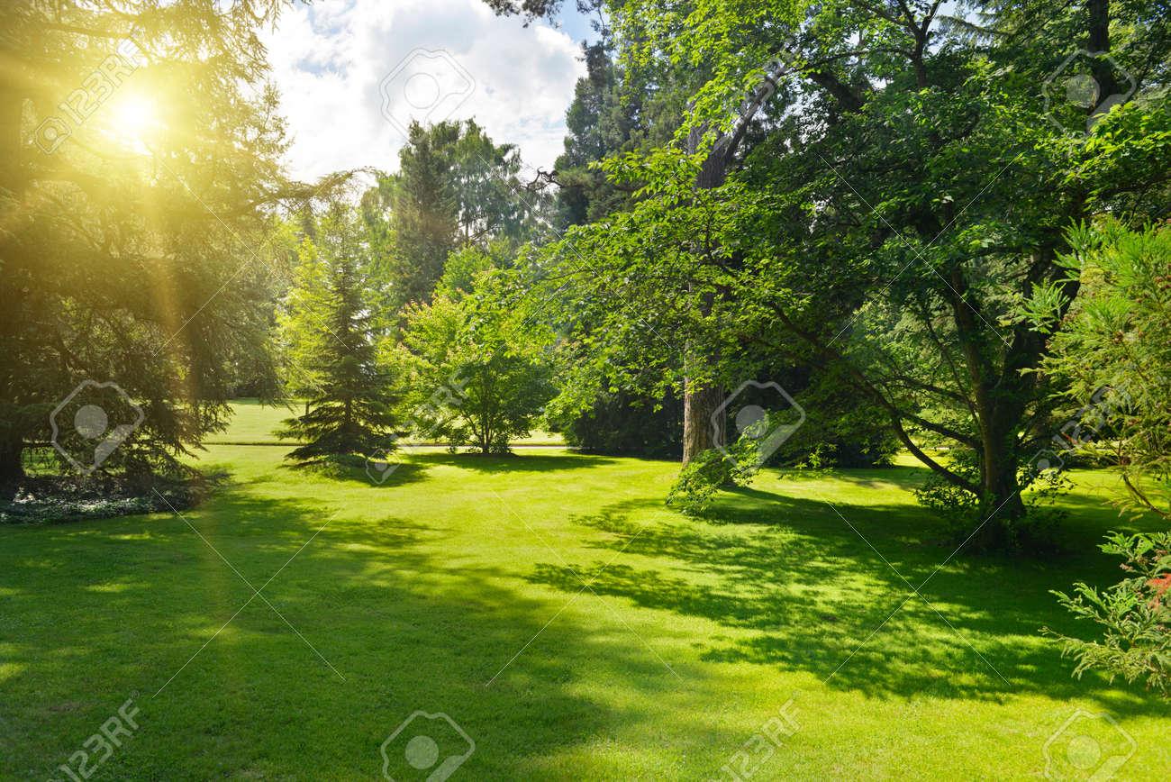 Sunrise in beautiful park. - 32444306