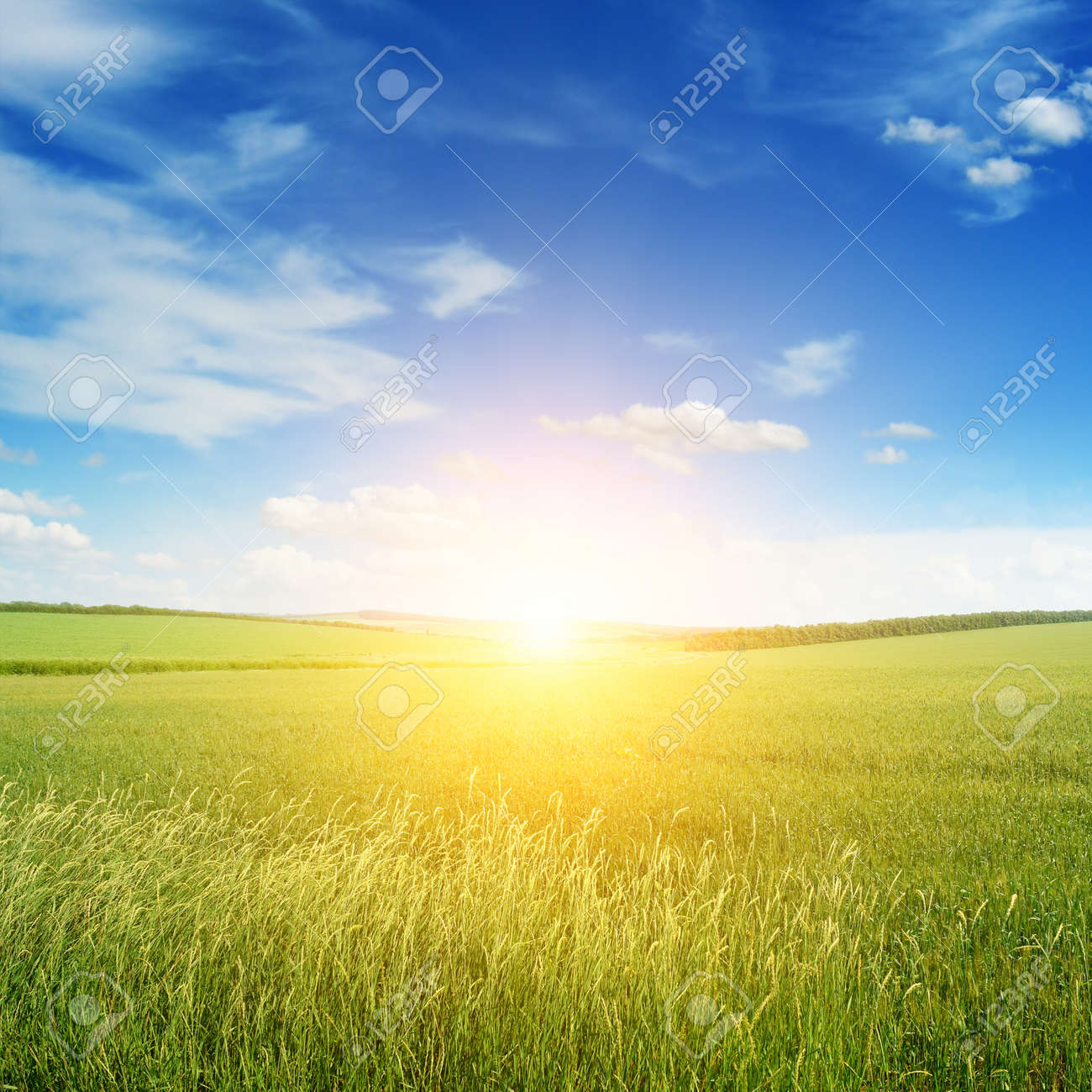 Beautiful sunset on green field - 38970399
