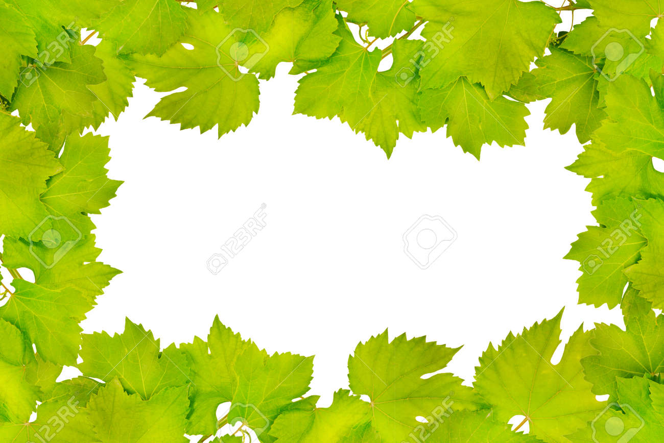 Border of fresh grape leaves isolated on white - 44373610