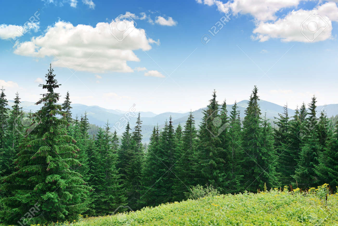 Beautiful Pine Trees On Background High Mountains Stock Photo Picture And Royalty Free Image Image 45244918