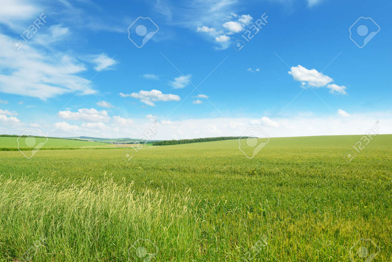 spring meadow and blue sky - 46432547