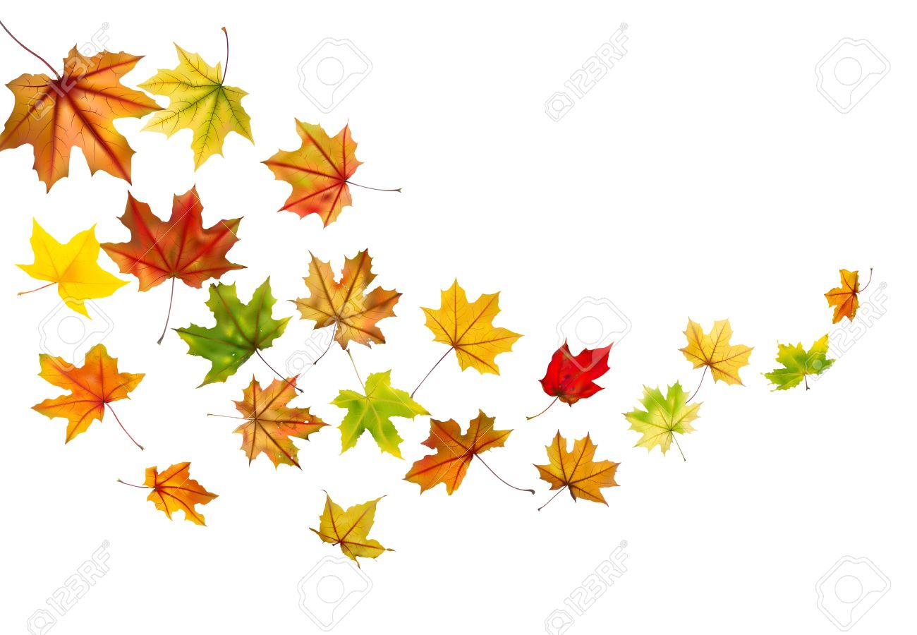 maple autumn falling leaves vector illustration royalty free