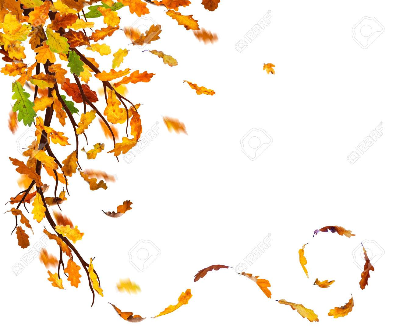 Famous 1 2 3 Nu Kapitel Resume Thin 1.5 Binder Spine Template Solid 1st Job Resume Template 2 Column Css Template Youthful 2 Page Brochure Template Blue2 Page Resume Template Download Branch With Autumn Oak Leaves Falling Down On White Background ..