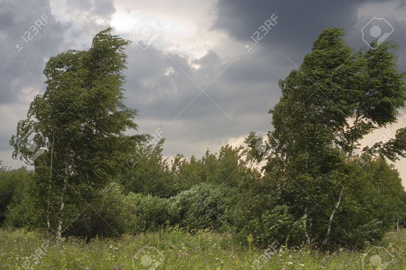 Storm In The Forest At Summer Day Stock Photo, Picture And Royalty Free  Image. Image 1357416.