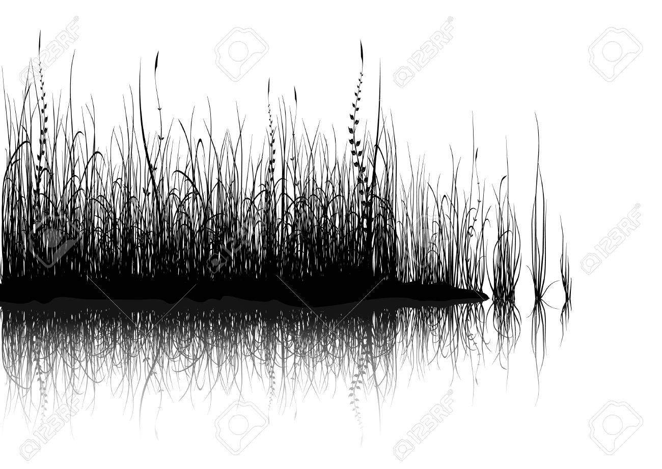 Black grass isolated on white Stock Vector - 4370896