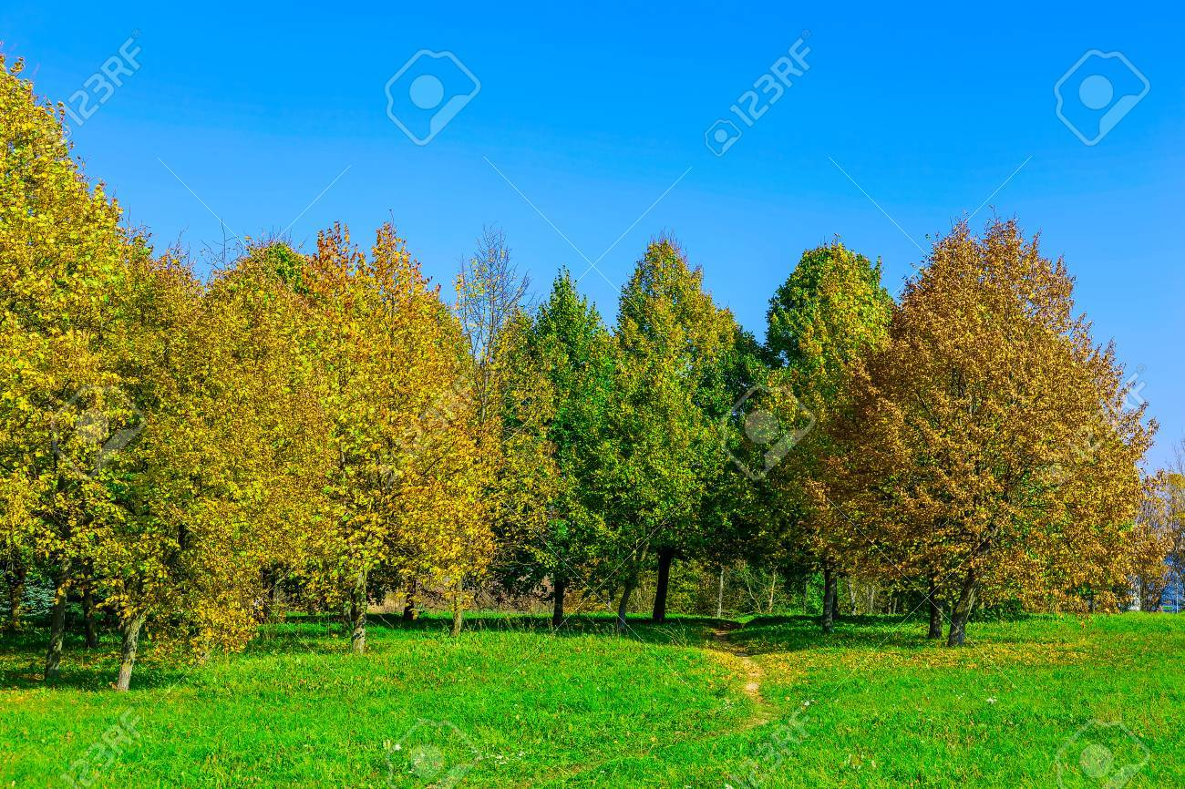 Autumn Scenery With Multicolored Trees On Green Grass In Sunlight ...