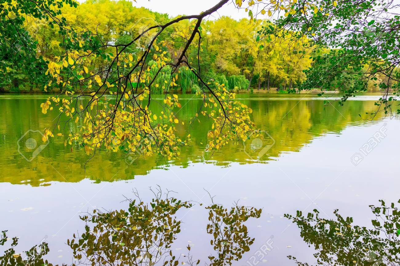 Branches Of Tree Hanging Over Water Surface Against Colorful.. Stock ...