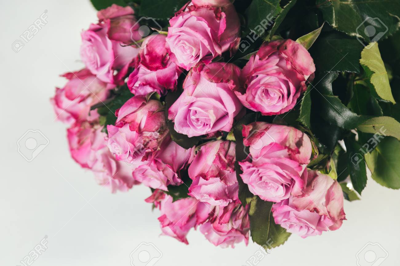 Bouquet Of Pink Roses Upside Down Isolated On White Background Stock
