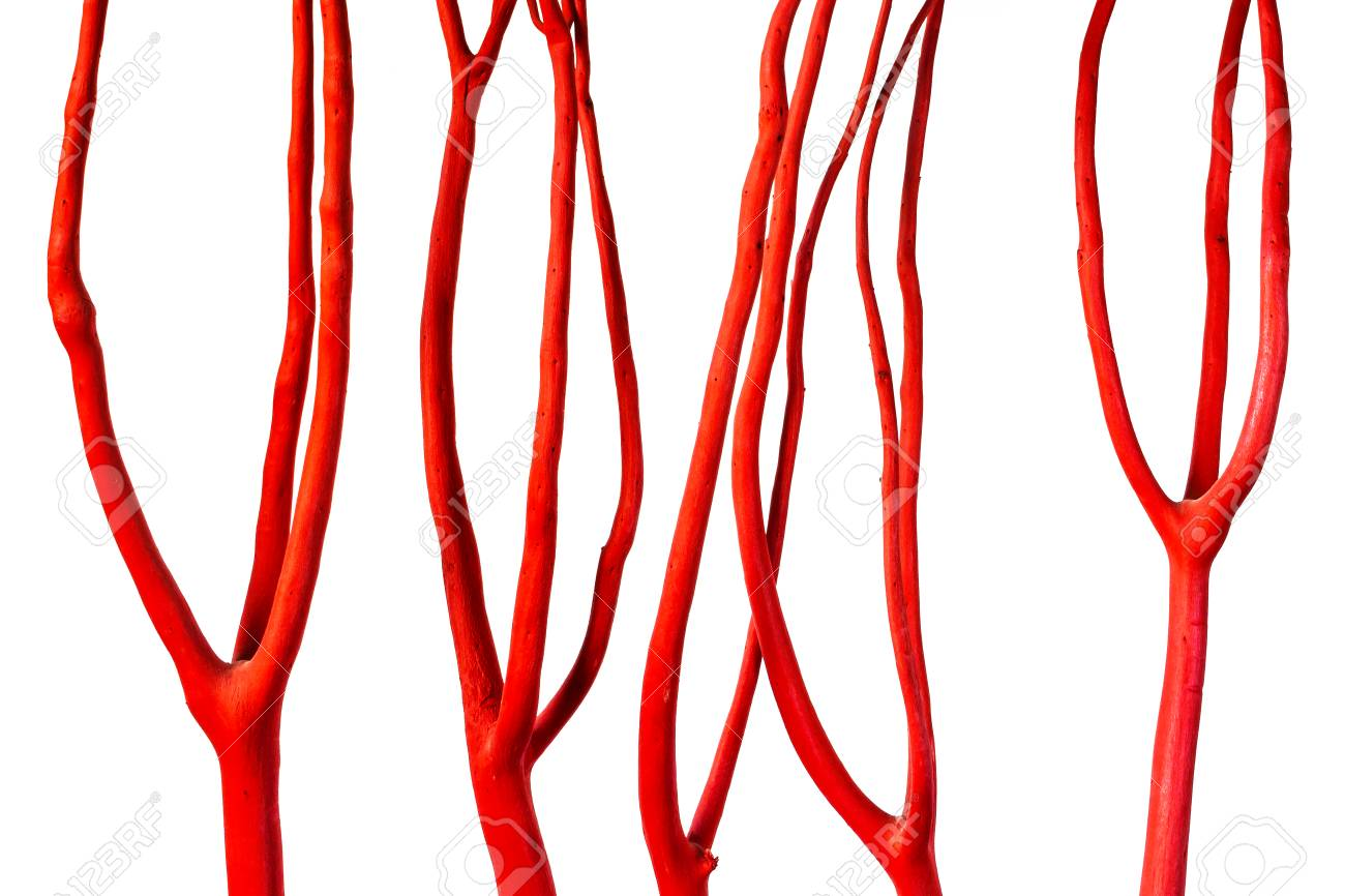Decorative Dry Tree Branches Painted In Red And Shot Close Up Stock Photo Picture And Royalty Free Image Image 89280953