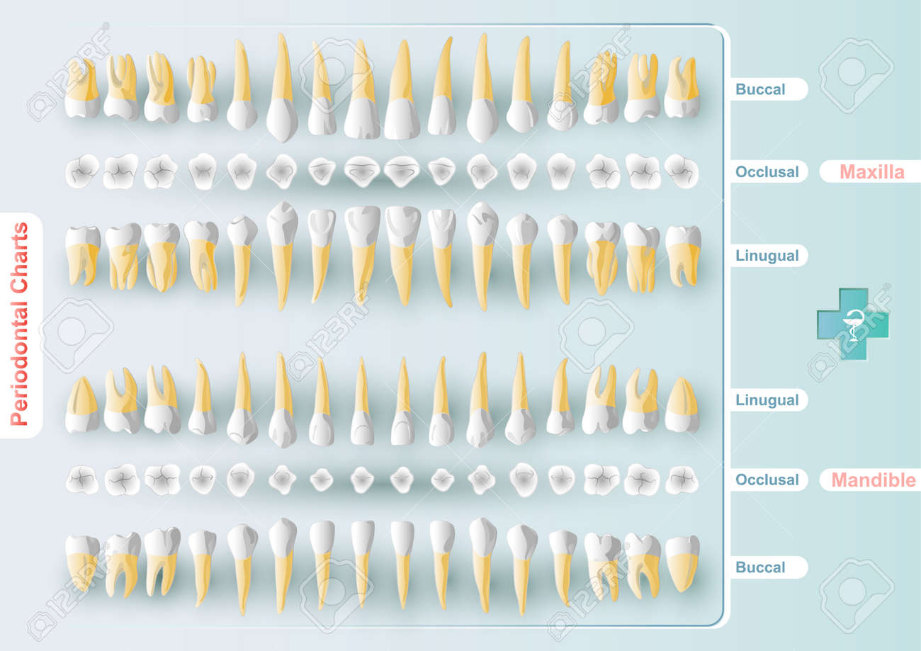 form table dental and periodontal charting in vector format