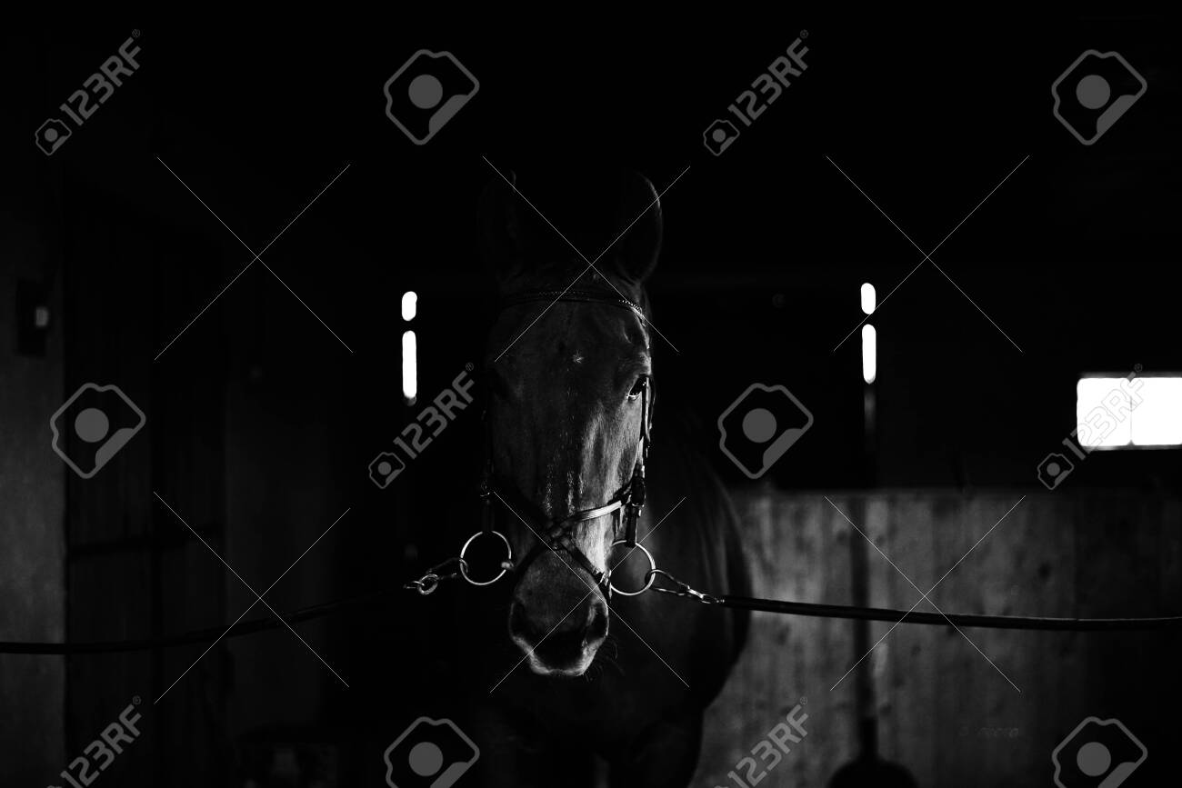 Black Horse Black Wild Horse In Natural Background Portrait Stock Photo Picture And Royalty Free Image Image 140290163