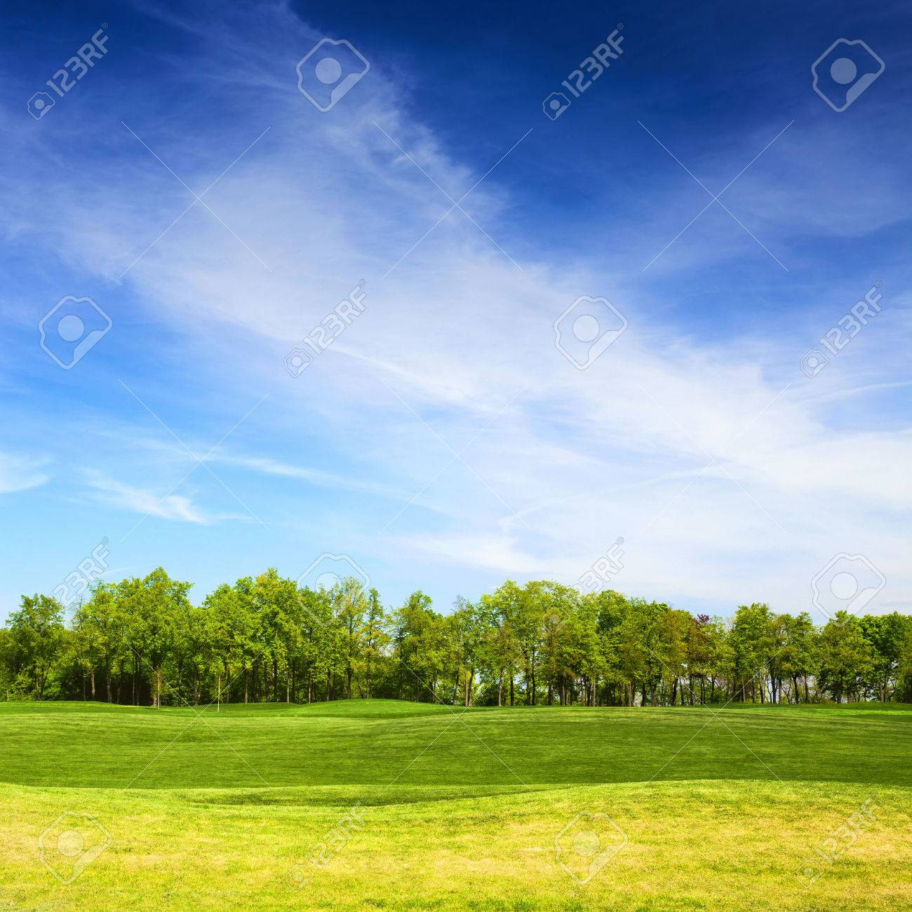 grassy field background. Grassy Field And Trees With Blue Sky On Background, Landscape In Summer Day  Stock Photo Background C