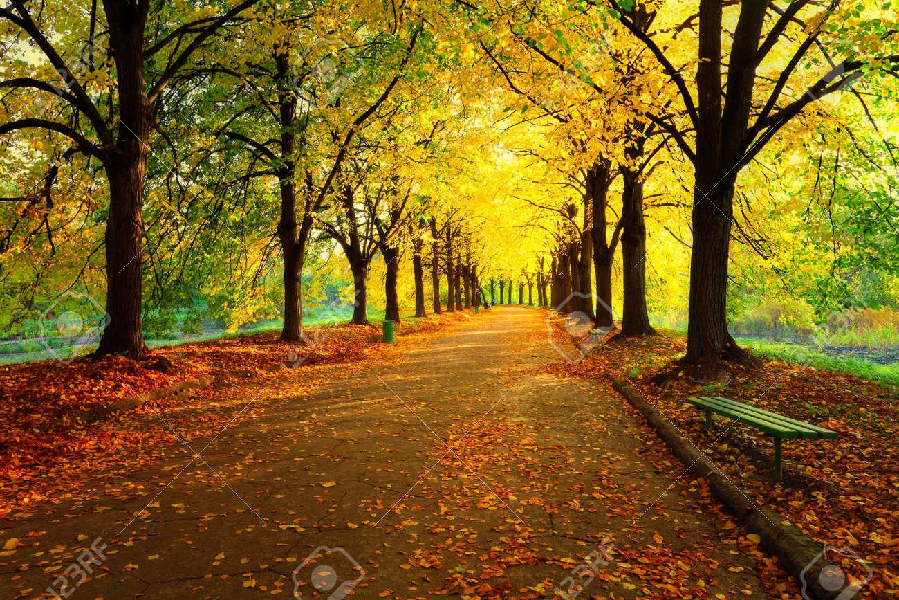 ⭐️ Cảnh Đẹp Mùa Xuân Trên Thế Giới ⭐️ 43936835-autumn-in-city-park-colourful-leaves-in-sun-light-empty-bench-near-the-tree-beauty-nature-scene-at-f