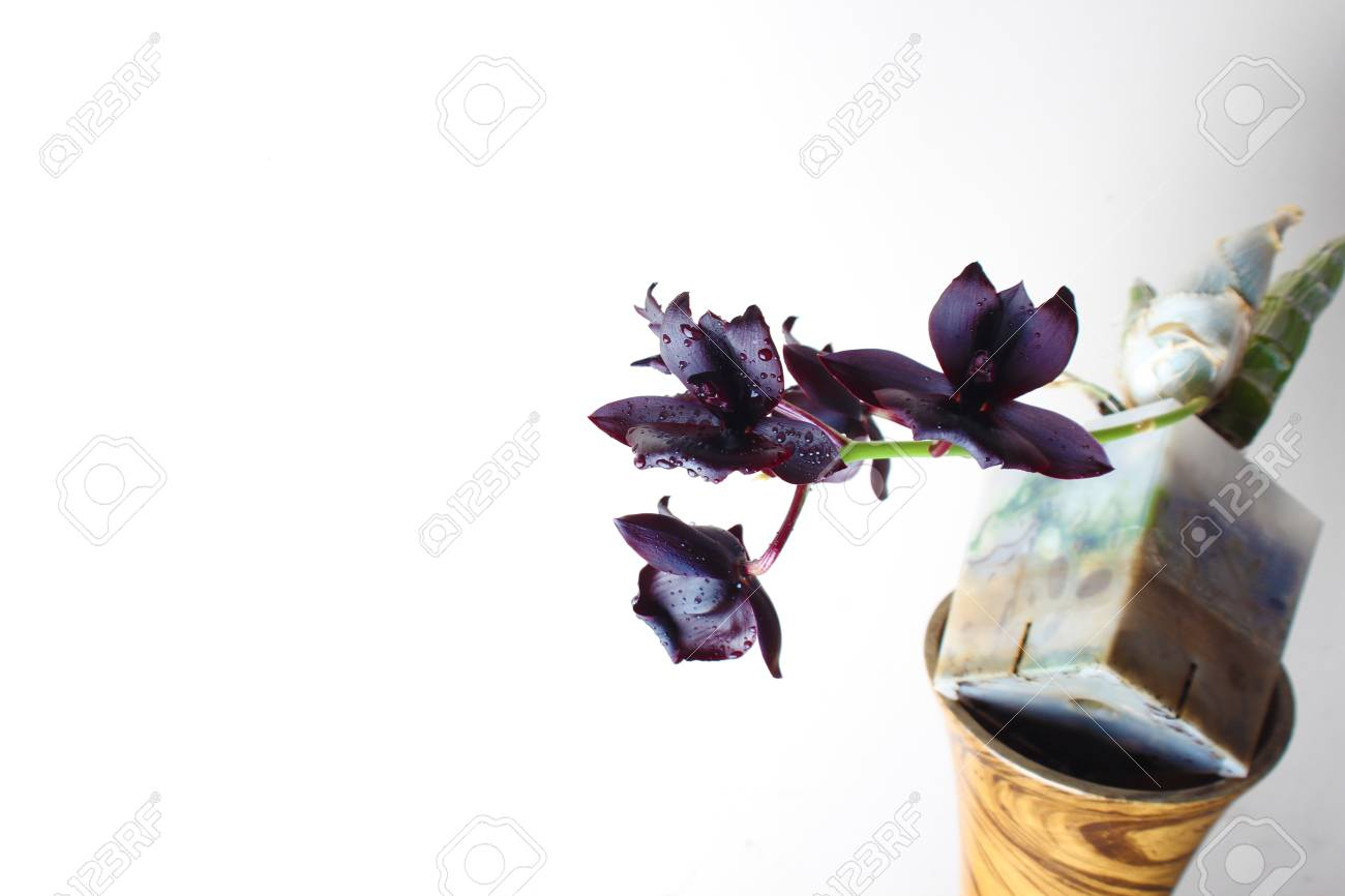 Dark Black Orchid Flower On A Light Background Stock Photo Picture