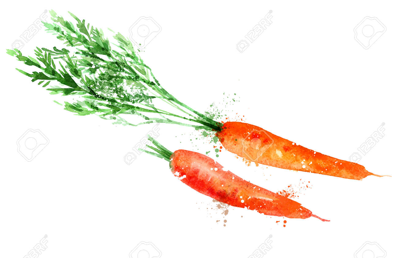 Watercolor Carrot On A White Background Vector Illustration Royalty Free Cliparts Vectors And Stock Illustration Image 36861488 There are a few watercolor techniques that make it much more interesting and can make your process easier. watercolor carrot on a white background vector illustration
