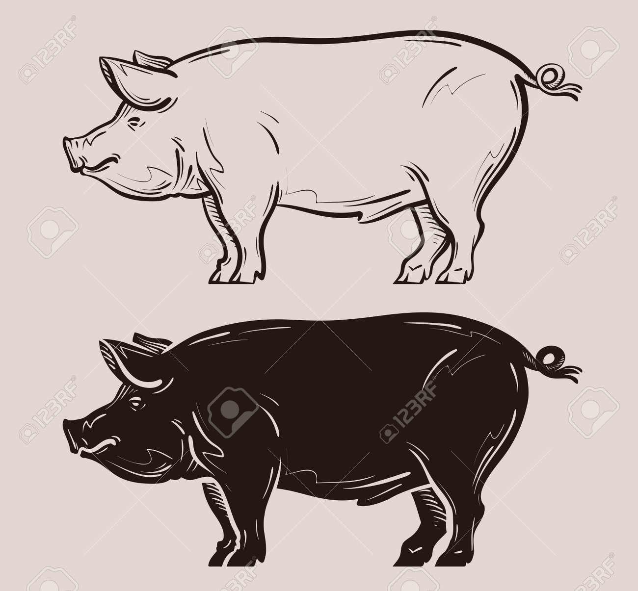 pig vector. farm, pork or piggy icon - 56433311