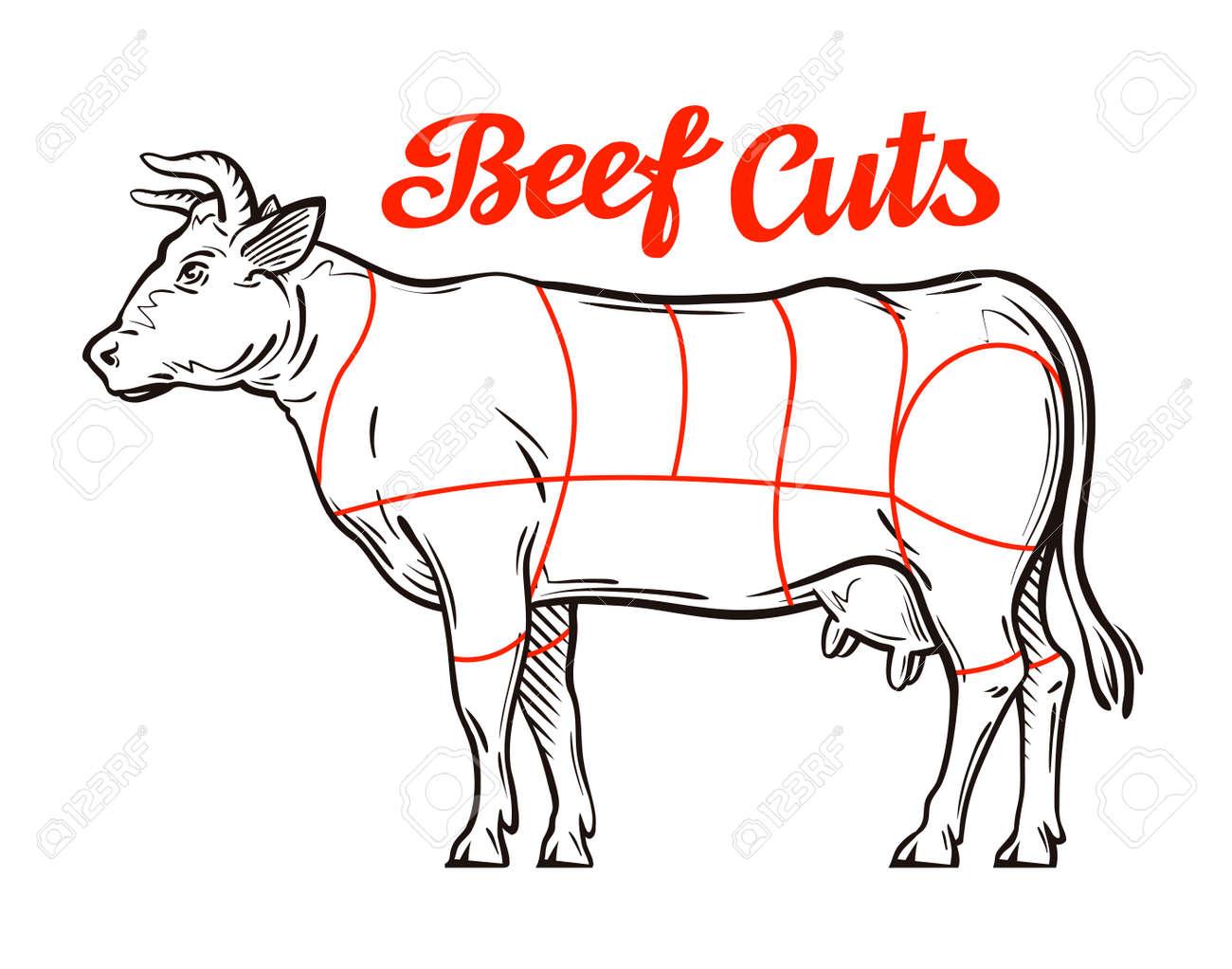 d06205218d Foto de archivo - Vector gráfico de la carne de vacuno. cortes de carne o  carnicería