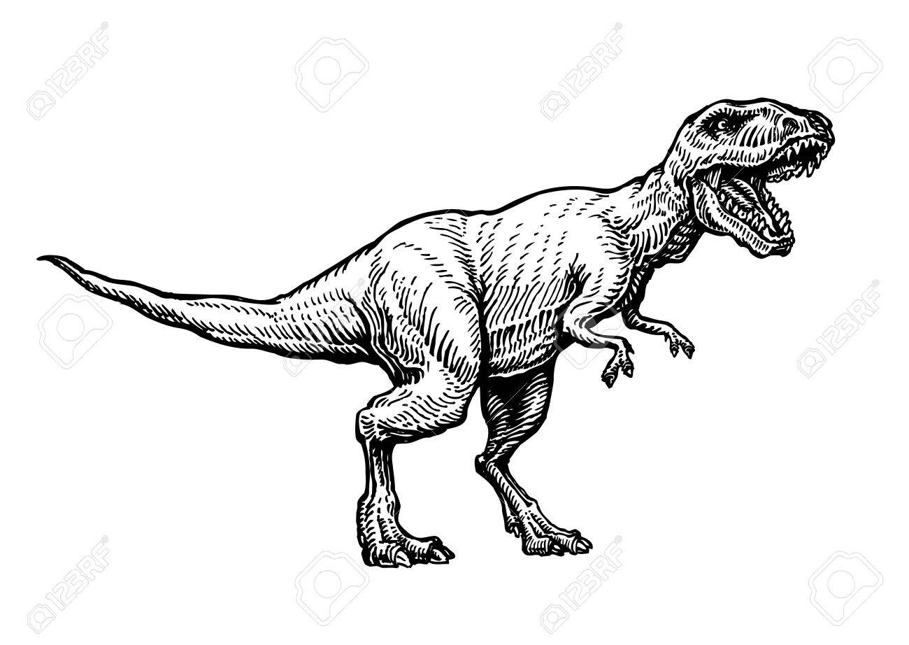 Angry tyrannosaurus rex with open huge mouth, sketch. Hand-drawn carnivorous dinosaur. Animal vector illustration - 72921701