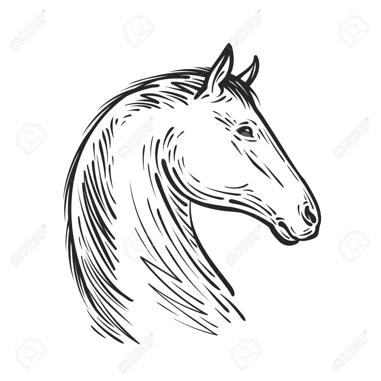 Horse Sketch Royalty Free Cliparts Vectors And Stock Illustration Image 92136043