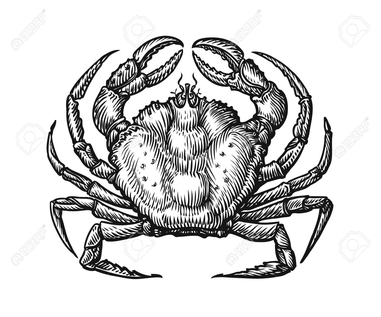 Crab with claws sketch illustration in vintage engraving style. Seafood hand drawn vector - 165666713