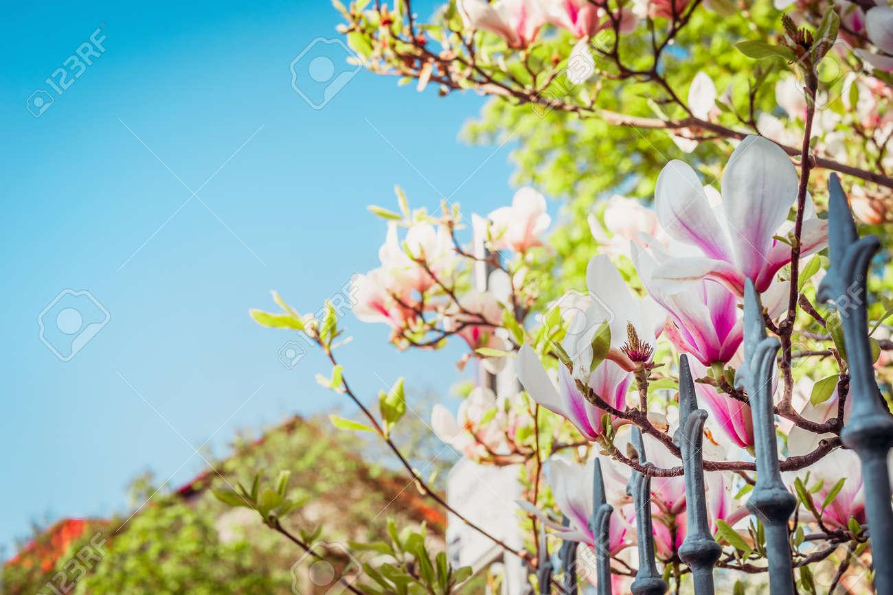 Schöner Frühling Oder Sommer Natur Hintergrund Mit Kastanienblüte ...