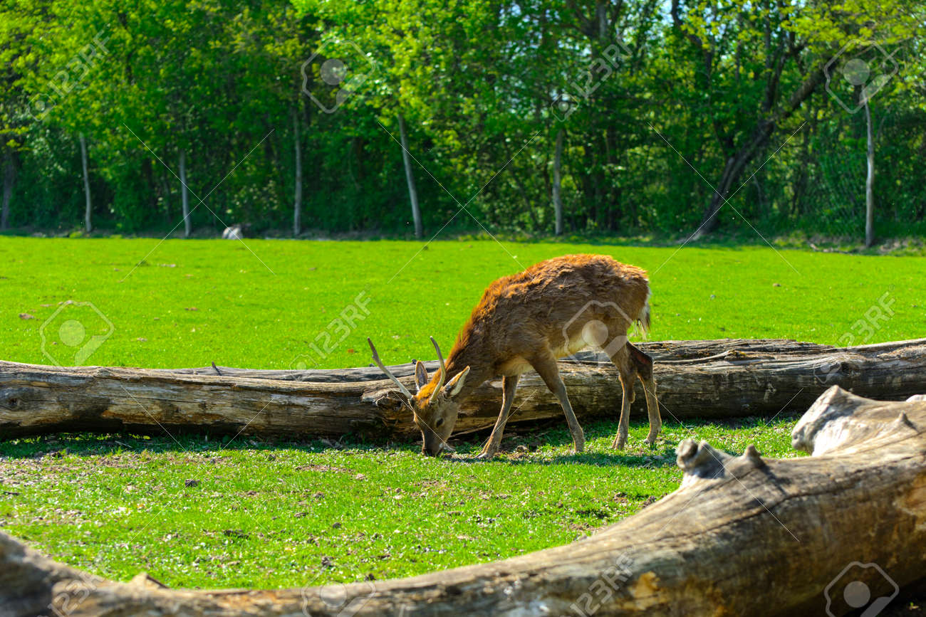 The head of a deer with its own hands made of cardboard or plywood