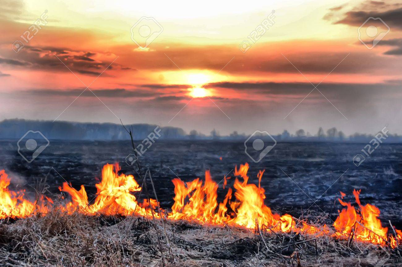 Fire of grass at sunset Stock Photo - 7504848