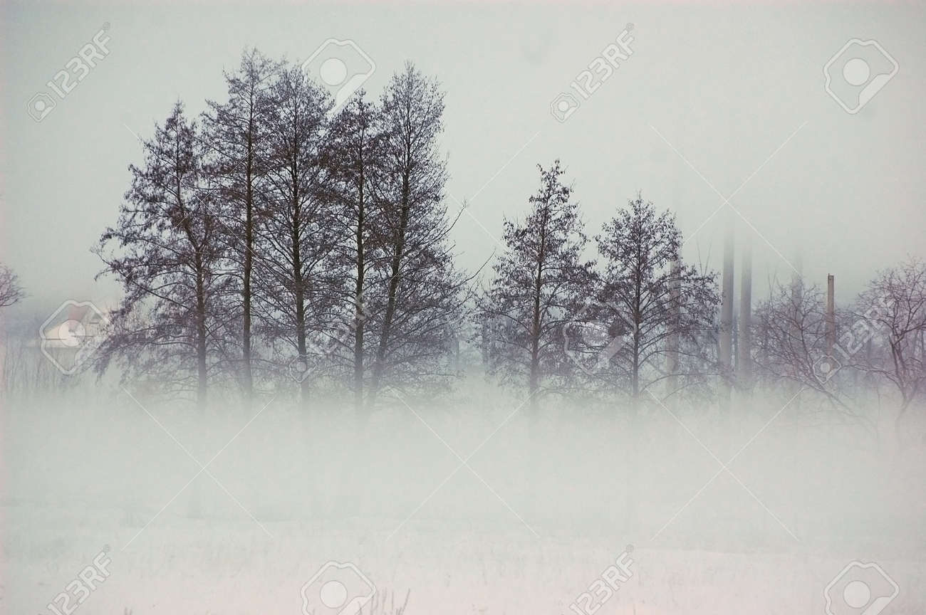 Fog at winter in Ukrainian countryside.Near Kiev Stock Photo - 12545965