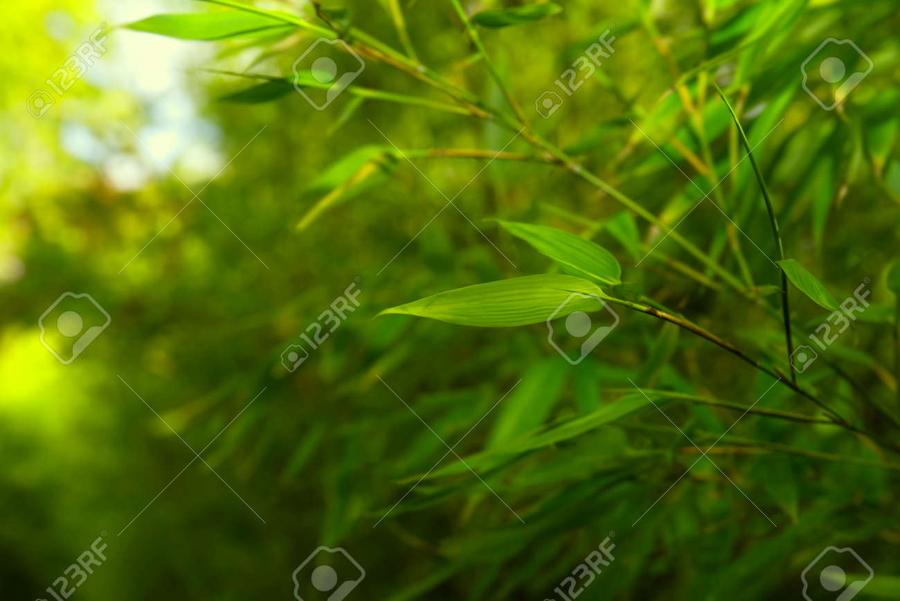 Bamboo Rainforest Bamboo Plant Bamboo Trees In Wood Nature