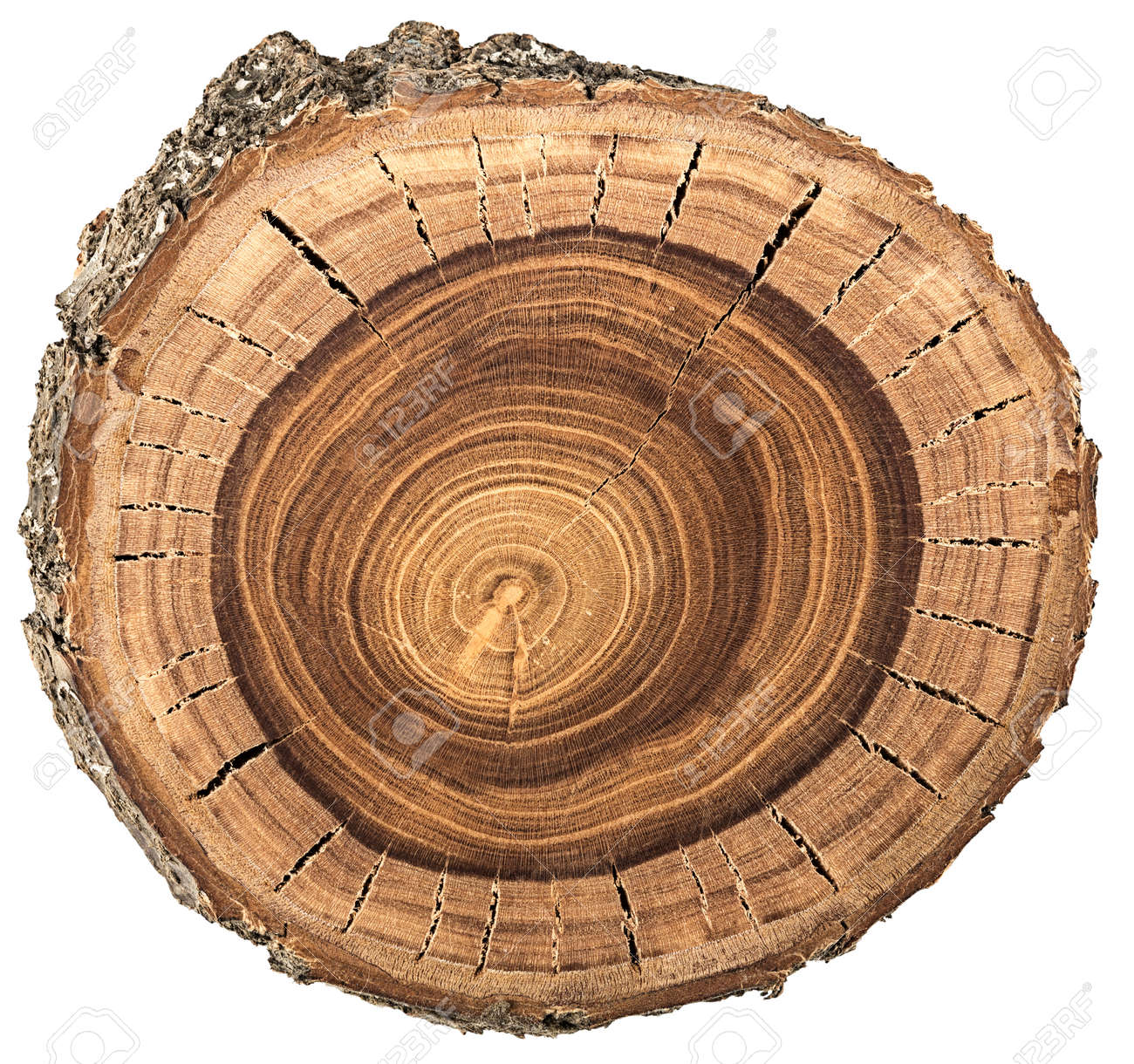 https://previews.123rf.com/images/sergieiev/sergieiev1503/sergieiev150300076/37839744-wood-circle-texture-slice-background-Stock-Photo.jpg