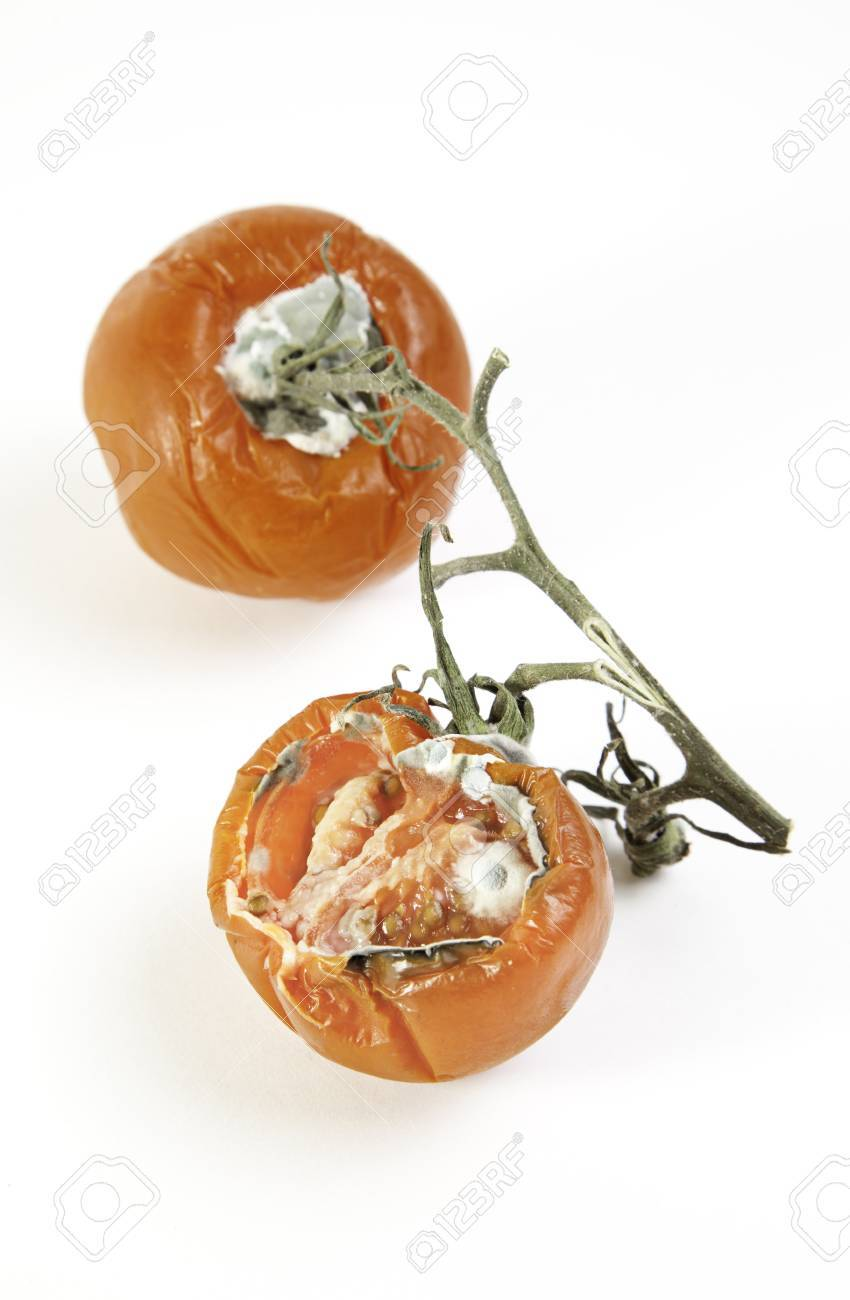 Bad tomatoes, vegetable detail spoiled by the weather, food poisoning, food background Stock Photo - 18827625