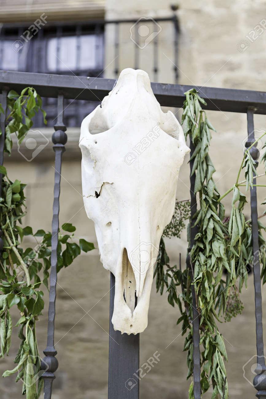 Alte Kuh-Schädel, Detail Eines Alten Tote Kuh Kopf, Riutal ...