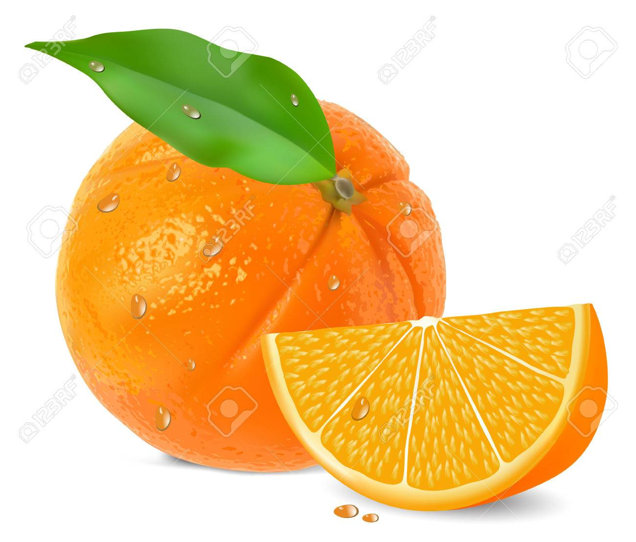 Orange with segments on a white background vector Stock Vector - 8473323