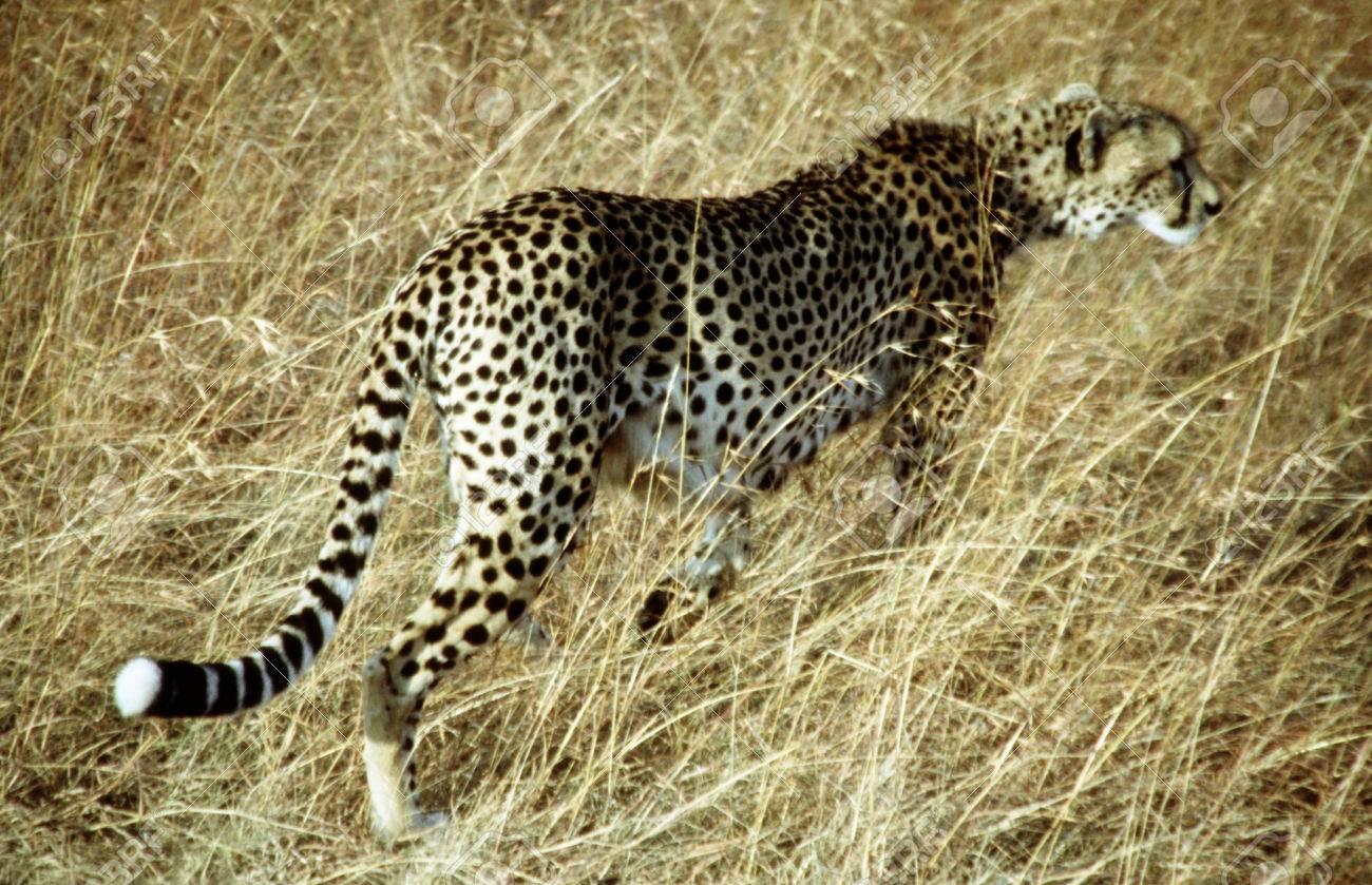 Masai mara hunting safari