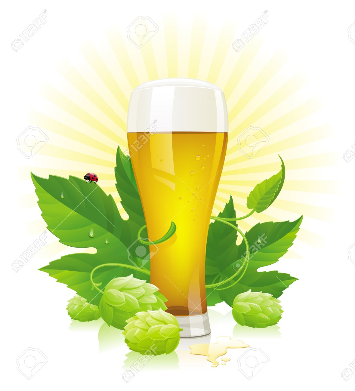 Vector glass of beer, hop  and leaves Stock Vector - 12488150