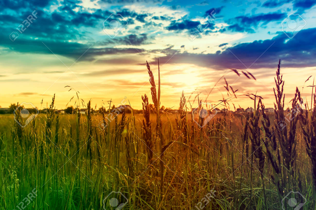 Golden evening on the meadow rural summer backgrounds stock photo golden evening on the meadow rural summer backgrounds stock photo 99080477 voltagebd Images